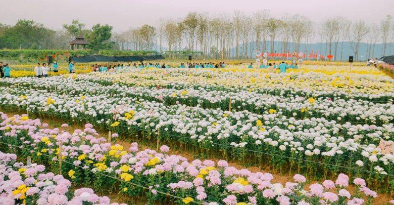 เทศกาลเบญจมาศในม่านหมอก